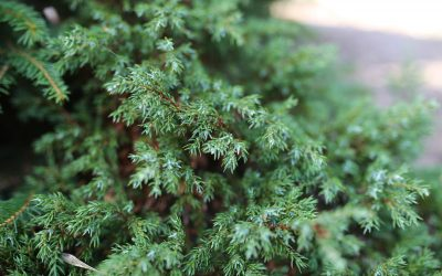 Flere planteskoler i Eliteplanter Norge SA