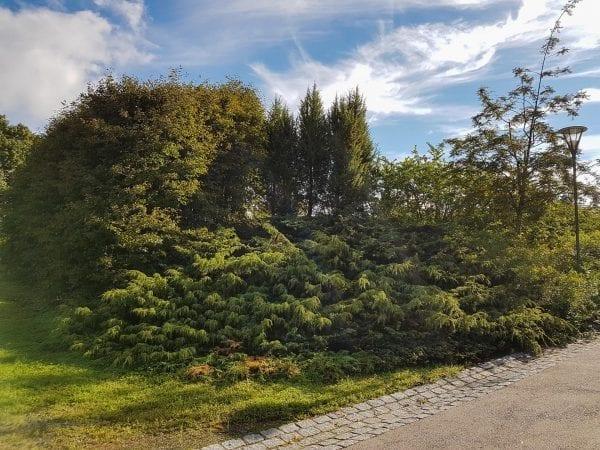 Norsk einer 'Oskeladden' E – JUNCOMOSK-4