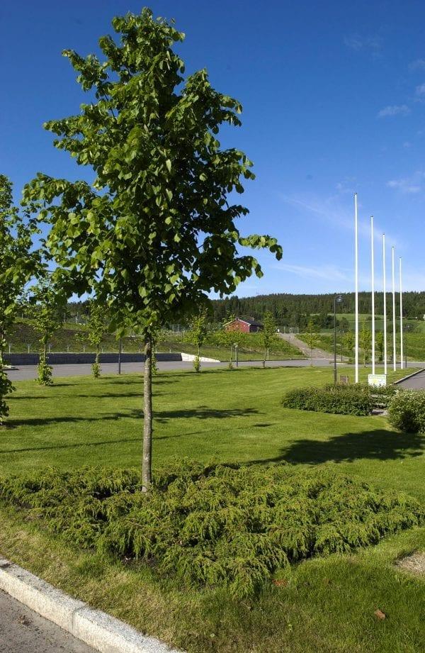 Norsk einer 'Tyrihans' E – JUNCOMTYR-1