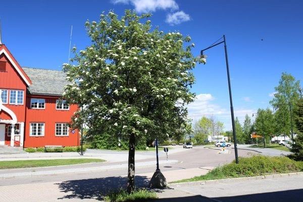 Rognasal fk Nordfjord – SORHYBNOR-3