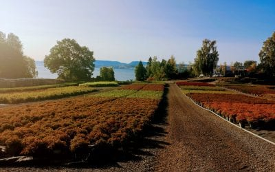 Plantevandring hos Baldishol planteskole og Mellbyes planteskole